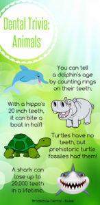 Boise Dental Office, Animal Teeth Trivia